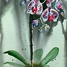 The Weeping Orchids by Louisa McHugh
