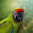 parrot by lucyliu