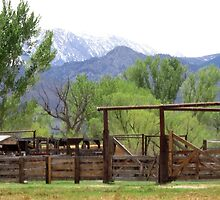 Welcome To The Ranch by marilyn diaz