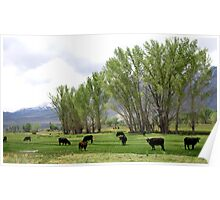 Paradise For Cows Poster