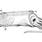 Crying calamari illustration vintage by Goran Medjugorac
