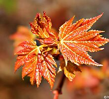 New leaves by Jeanette Muhr