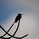 Humming Bird by mikepemberton