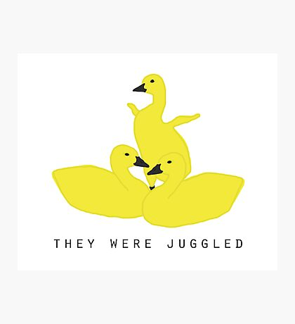 Baby geese - goslings! They were juggled! Photographic Print