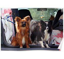 Pups Poster