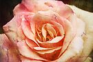 Textured Rose by Sea-Change