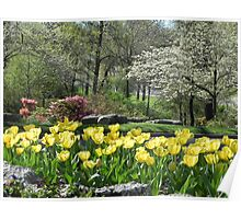 Yellow Tulips Greeters Poster