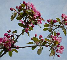 April Blossoms by Gerda Grice