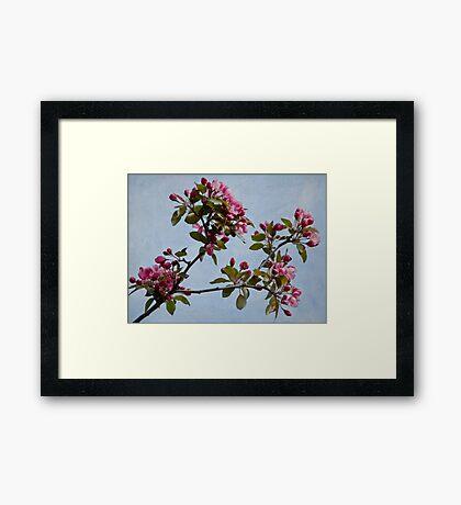 April Blossoms Framed Print