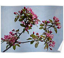 April Blossoms Poster