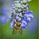 Bizzy Bee by Barb Leopold