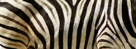 Stripes by Carole-Anne