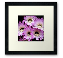 Pretty & Pink in the Summer Rain Framed Print