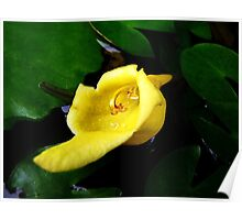 yellow tropical flower Poster