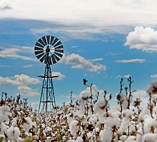 Cotton Pickin' - Toowoomba Qld Australia by Beth  Wode