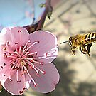 Bee Line to Blossom-Spring  Sept.2010 by EdsMum