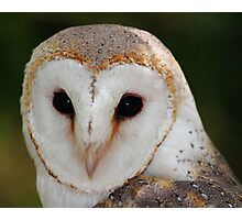 """Wise Owl"" Photographic Print"