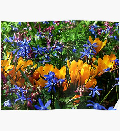 The Bright Colors of Spring Poster