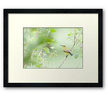 Bird in the bush - honey eater  Framed Print