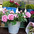 Germany Flower market  by KSKphotography
