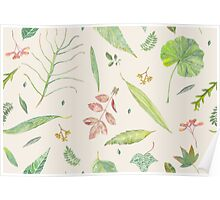 Leaf study watercolor Poster