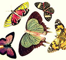 Butterfly Group by Melissa Blowers