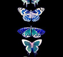 Butterfly Line Black by Melissa Blowers
