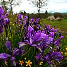 We Find The Beauty by Charles & Patricia   Harkins ~ Picture Oregon
