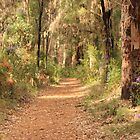 Through the Gum Trees, Gloucester National Park, Pemberton, WA by Elaine Teague
