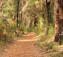 Through the Gum Trees, Gloucester National Park, Pemberton, Western Australia by Elaine Teague