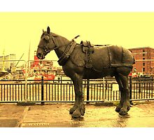 OLD DOCK HORSE Photographic Print