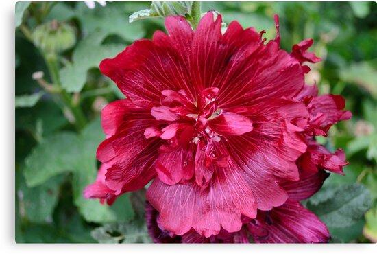 Flower 01 by Mark Fendrick