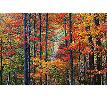 AUTUMN BLISS Photographic Print