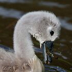 Cygnet Having Lunch by Michael G Devereux