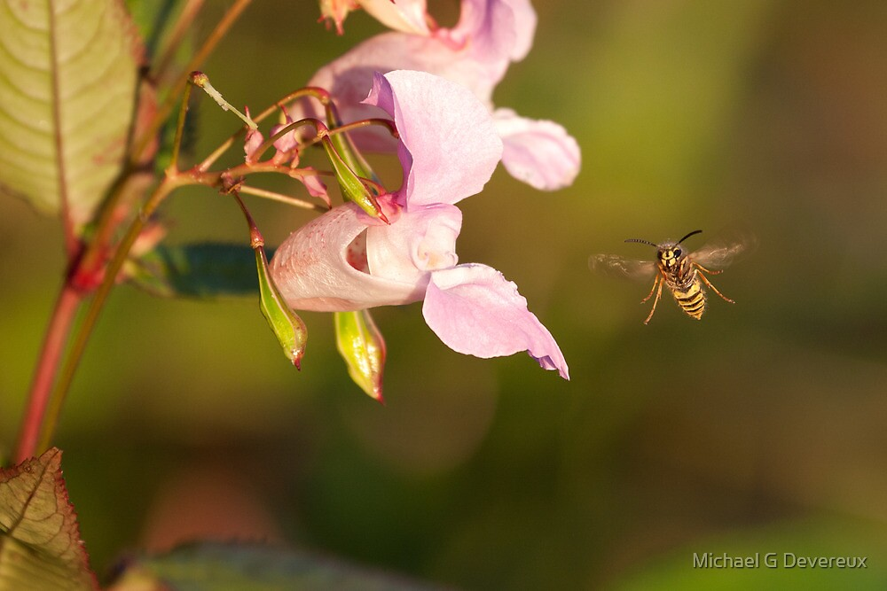 Wasp in Flight by Michael G Devereux