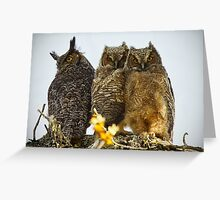 Great Horned Owl Fledglings Greeting Card