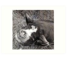 Of Pigs and Porky-Pies Art Print