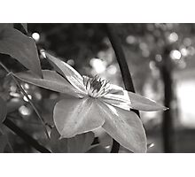 Black & White in the Spring Photographic Print