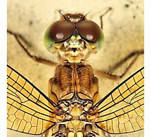Dragonfly close-up Photographic Print