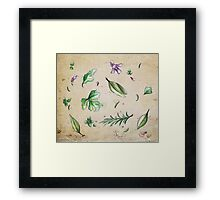 Parsley, Sage, Rosemary and Thyme Framed Print
