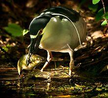 Night Heron and Catfish by Joe Jennelle