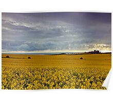 Rape Seed field at Bamburgh Poster
