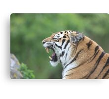 Tiger Yawning Canvas Print
