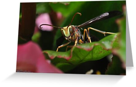 Buzzz Up! by michaelasamples