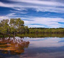 Mangrove by dbax