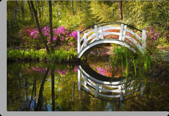 Charleston SC Magnolia Plantation Spring Blooming Azalea Flowers Garden by Dave Allen