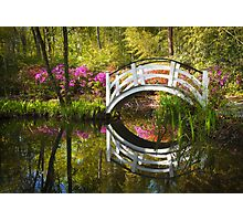 Charleston SC Magnolia Plantation Spring Blooming Azalea Flowers Garden Photographic Print