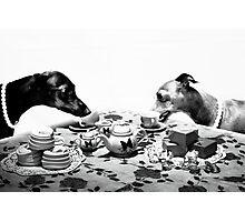 Doggy Tea Party Photographic Print