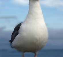 Admiral Seagull Sticker