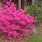 Beautiful Spring Bush Challenge